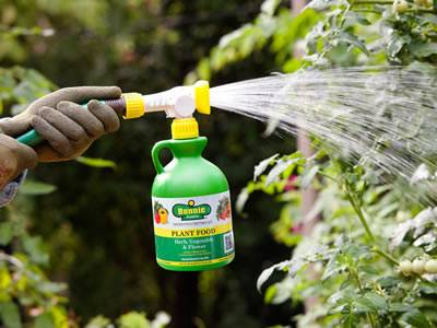 A worker is spraying pesticide onto trees with garden hose.